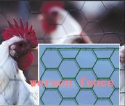 Hexagonal wire netting/chicken wire /poultry netting/hex nettings/ pou